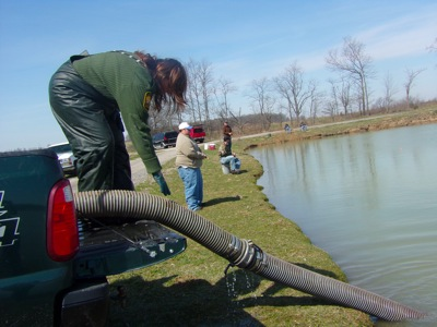 Rainbow trout stocked in lake near st marys the daily for Fish hatchery ohio